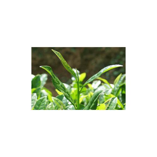 低温带式干燥茶粉生产线设备